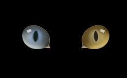 Μάτια γατών, μάτι γατών Στοκ Εικόνες
