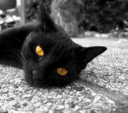 μάτια γατών χρυσά Στοκ Εικόνες
