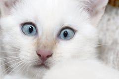 Μάτια γατών Στοκ φωτογραφία με δικαίωμα ελεύθερης χρήσης