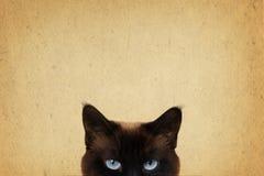 Μάτια γατών Στοκ Φωτογραφίες