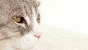 Μάτια γατών φιλμ μικρού μήκους