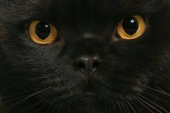 μάτια γατών Στοκ Φωτογραφία