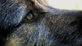 Μάτια Λα mirada de perro σκυλιών Στοκ φωτογραφίες με δικαίωμα ελεύθερης χρήσης