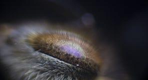 Μάτια μελισσών μικρογραφημάτων Στοκ Φωτογραφίες