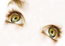 μάτια πράσινα στοκ φωτογραφία με δικαίωμα ελεύθερης χρήσης
