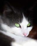 μάτια πράσινα στοκ φωτογραφίες