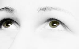 μάτια πράσινα στοκ εικόνα με δικαίωμα ελεύθερης χρήσης