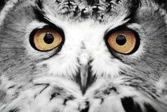 μάτια σοφά Στοκ φωτογραφία με δικαίωμα ελεύθερης χρήσης