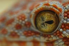 Μάτια Gecko Στοκ Φωτογραφίες