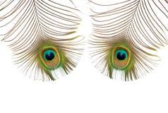 μάτια peacock Στοκ φωτογραφίες με δικαίωμα ελεύθερης χρήσης
