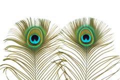 Μάτια Peacock Στοκ Εικόνα