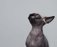μάτι αυτιών ένα Στοκ φωτογραφία με δικαίωμα ελεύθερης χρήσης