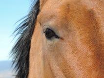 Μάτι αλόγων Στοκ φωτογραφία με δικαίωμα ελεύθερης χρήσης