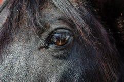 Μάτι αλόγων \ «s Στοκ φωτογραφία με δικαίωμα ελεύθερης χρήσης