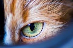 Μάτι γατών Μακρο βλαστός Στοκ εικόνα με δικαίωμα ελεύθερης χρήσης