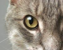 μάτι γατών Στοκ Φωτογραφία