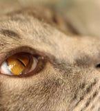 Μάτι γατών 2 στοκ εικόνα