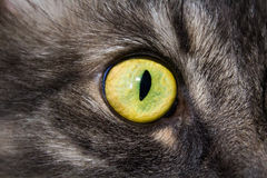 Μάτι γατών ` s μεγάλο στοκ φωτογραφίες με δικαίωμα ελεύθερης χρήσης