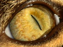 μάτι γατών s Στοκ φωτογραφία με δικαίωμα ελεύθερης χρήσης