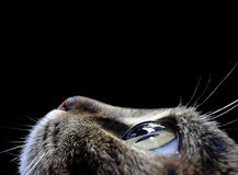 Μάτι γατών ` s Στοκ Φωτογραφίες