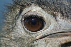 μάτι εσείς Στοκ Φωτογραφία
