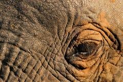 Μάτι ελεφάντων Στοκ Φωτογραφία