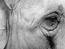 Μάτι ελεφάντων Στοκ εικόνες με δικαίωμα ελεύθερης χρήσης