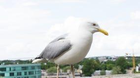 Μάτι καρτών πουλιών γλάρων Στοκ εικόνα με δικαίωμα ελεύθερης χρήσης