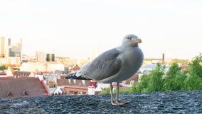 Μάτι καρτών πουλιών γλάρων Στοκ φωτογραφία με δικαίωμα ελεύθερης χρήσης
