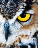 Μάτι κουκουβαγιών Στοκ φωτογραφίες με δικαίωμα ελεύθερης χρήσης