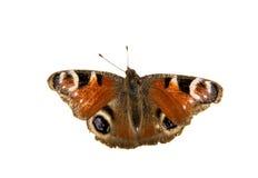 Μάτι πεταλούδων peacock Στοκ φωτογραφία με δικαίωμα ελεύθερης χρήσης