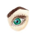 Μάτι, πράσινο μάτι watercolor που απομονώνεται Στοκ Εικόνα