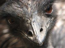 Μάτι στρουθοκαμήλων Στοκ φωτογραφία με δικαίωμα ελεύθερης χρήσης