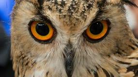 Μάτι της κουκουβάγιας Στοκ Φωτογραφία