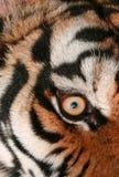 μάτι τιγρών Στοκ Εικόνες
