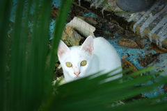 Μάτι του άσπρου πίσω φύλλου γατών Στοκ Εικόνα