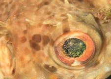 Μάτι του καπνιστή αστεριών Στοκ Εικόνες