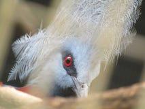 Μάτι του πουλιού Στοκ Εικόνα