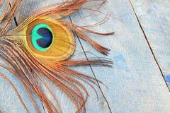 Μάτι του peacock στο μπλε ξύλο Στοκ Εικόνα