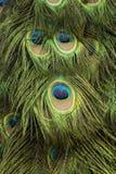Μάτι των φτερών Peacock Στοκ εικόνα με δικαίωμα ελεύθερης χρήσης