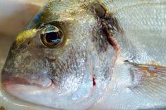 Μάτι ψαριών Στοκ Εικόνες
