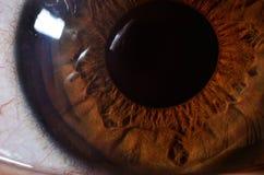 Μάτι Στοκ Εικόνα