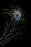 μάτι peacock Στοκ Εικόνες