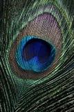 μάτι peacock Στοκ φωτογραφία με δικαίωμα ελεύθερης χρήσης