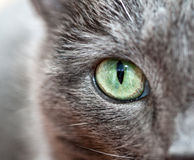 μάτι smokeys Στοκ Εικόνες