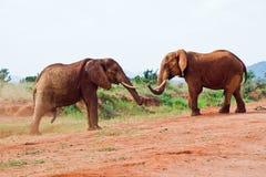 Μάχη των ελεφάντων στοκ φωτογραφία