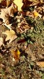 Μάλλινο σκουλήκι στοκ εικόνα