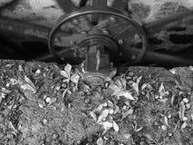 Μάλλινο Χάιλαντς μηχανημάτων μύλων Knockando της Σκωτίας Στοκ φωτογραφίες με δικαίωμα ελεύθερης χρήσης