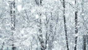 Μέγα πρόσθετος μεγάλος σφαιρικός χειμώνας δέντρων βρόχων χιονοπτώσεων απόθεμα βίντεο