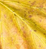 μέγεθος φύλλων εικόνας φθινοπώρου xxxl Κινηματογράφηση σε πρώτο πλάνο Στοκ Φωτογραφίες